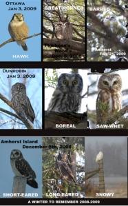 Owls2009B