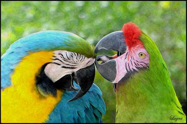 MacawBPN