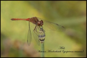 Dragonfly2-1024x683