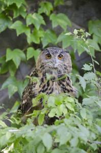 Owl-678x1024