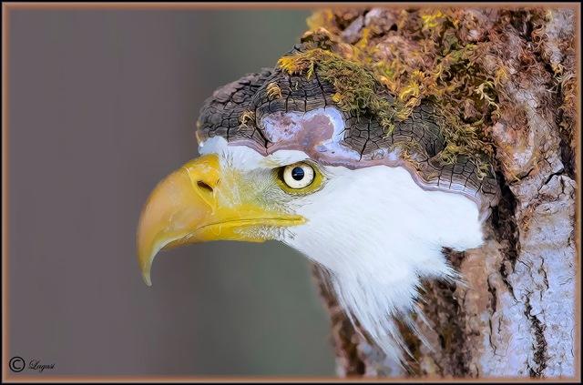 EagleBumpCBPN