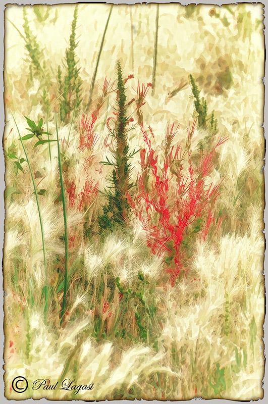 Weeds23BPN