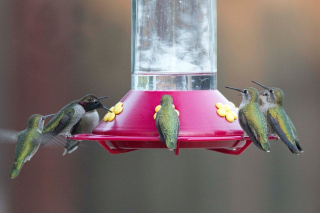 Hummingbird2015B