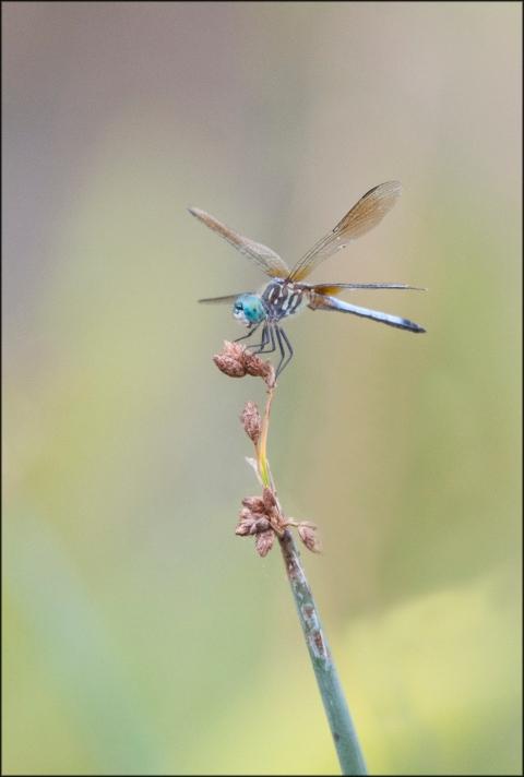 Dragonfly2015EFB