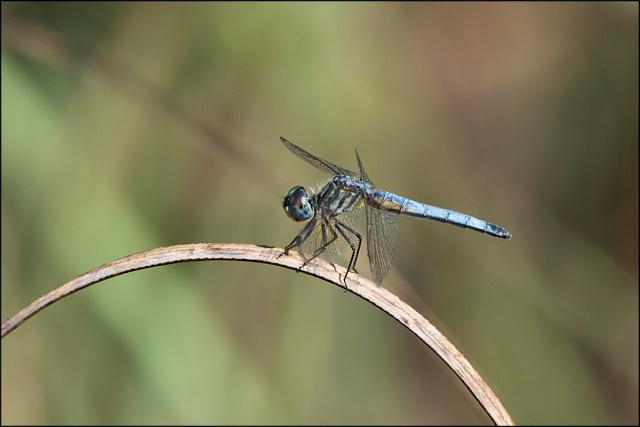 Dragonfly2015FB