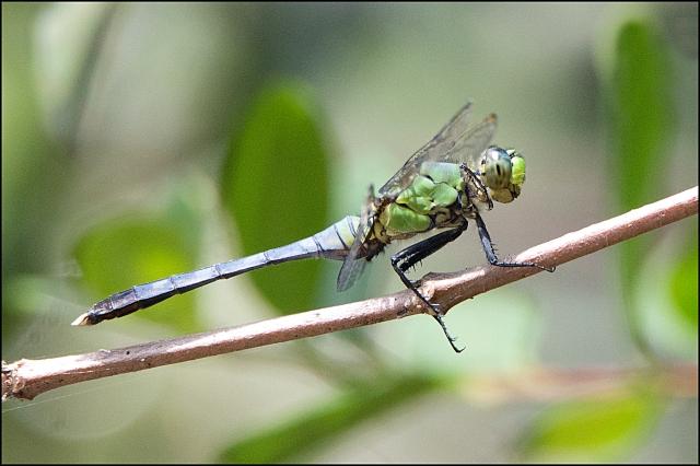 Dragonfly2015FFB