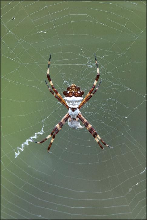 Spider2015BFB