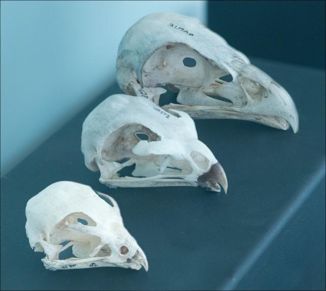 Skulls25