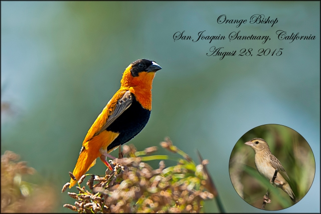 OrangeBishop2015