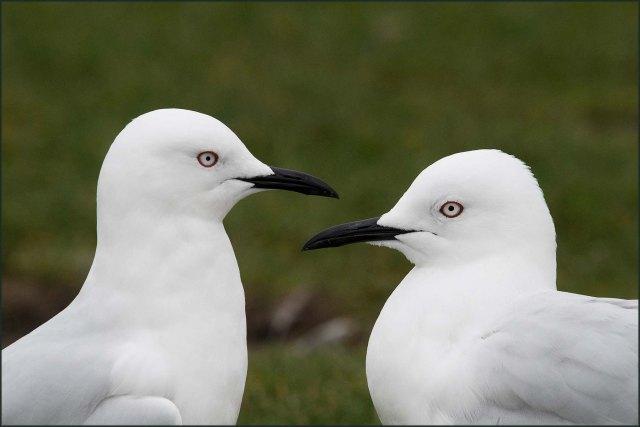 newzealandcookislands2016-332