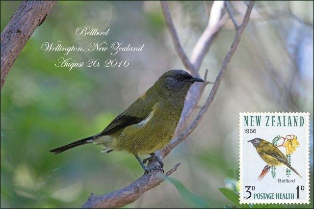 newzealandcookislands2016-445