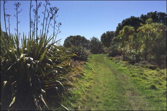 newzealandcookislands2016-472