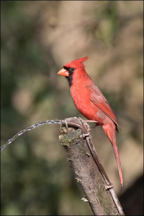 cardinal2017